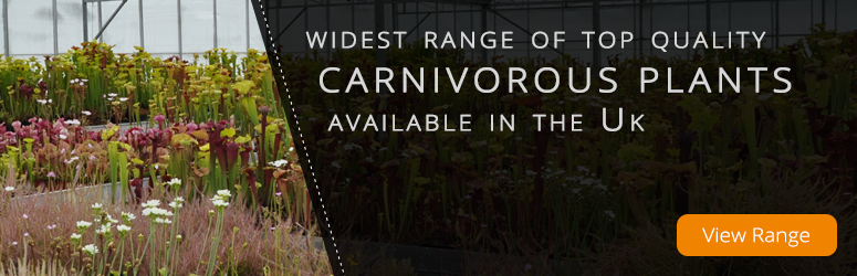 Widest Range of Top Quality Carnivorous Plants in the UK